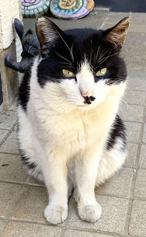 黒猫「ララ」